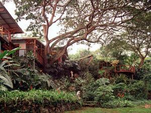 Pre-baby getaway at Dragonfly Ranch, Hawaii